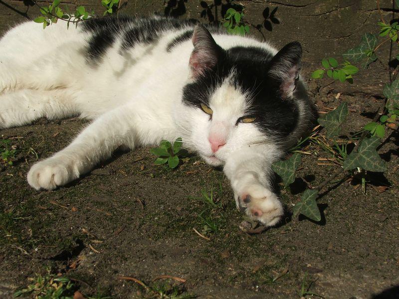cute cat recordings