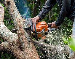 plymouth mi tree service